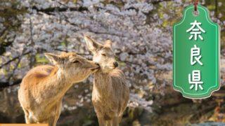奈良県の登録支援機関
