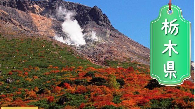 栃木県の登録支援機関